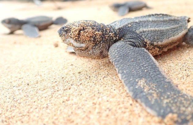 Aksi Peduli Wisata Pantai Pertamina