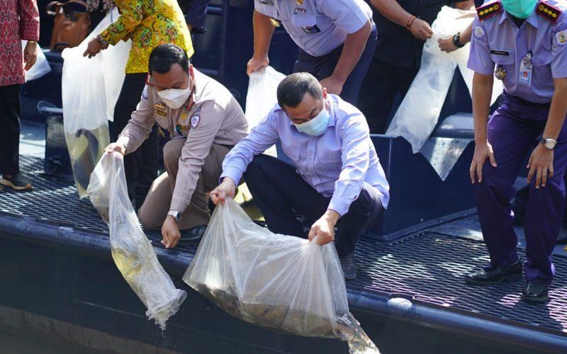 KKP Selamatkan 215 Ekor Ikan Dilindungi