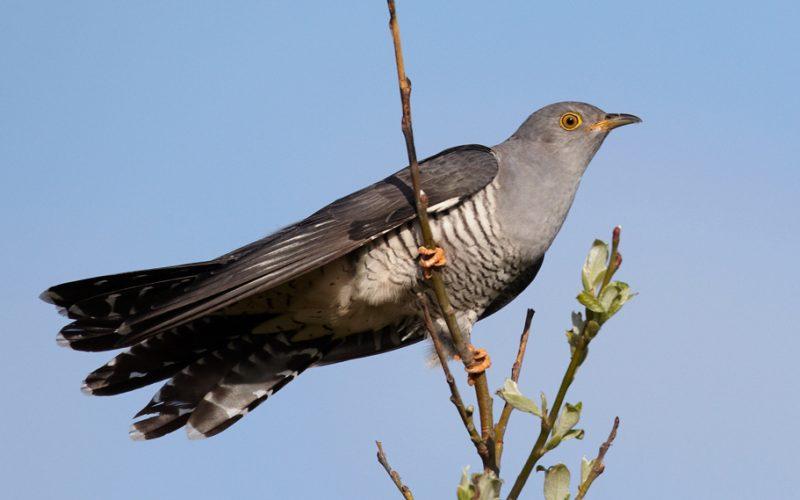 Kampus IPB University di Dramaga Dikunjungi Burung-Burung Bermigrasi