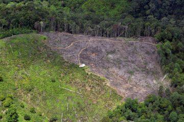 Laju Deforestasi Indonesia Turun 75,03 %