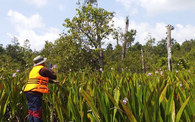 Inventarisasi Potensi Keanekaragaman Hayati Jenis Tumbuhan di TN Sebangau