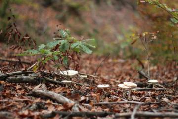 Mikroba Hutan, Si Kecil Bermanfaat Besar