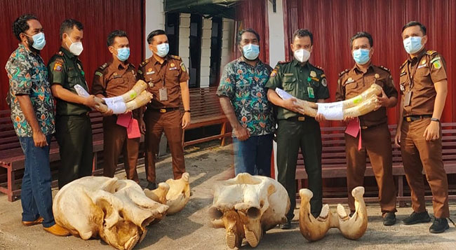 Vonis Penjara Dua Pembunuh Gajah di Kelayang Riau