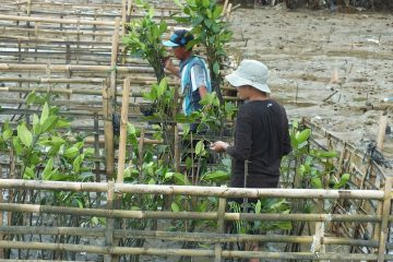 WAHMI Laksanakan Monev dan Perawatan Mangrove di Pesisir Karawang
