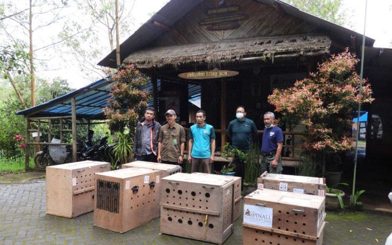 BBKSDA Jawa Timur Terima Translokasi 7 Ekor Lutung Budeng