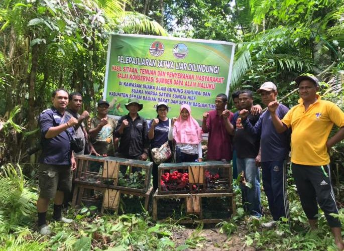 BKSDA Maluku Lepasliarkan 199 Ekor Satwa di Dua Lokasi