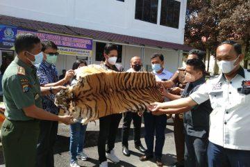 Balai Besar KSDA Sumatera Utara Terima Barang Bukti Kulit Harimau Sumatera