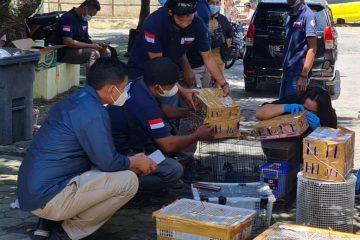 KLHK dan Polisi Sita Ratusan Satwa Burung Dilindungi di Bakauheni Lampung, Pelaku Ditahan