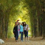 Menyongsong Kebangkitan Bambu Indonesia