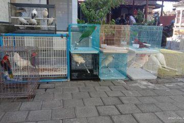 Tim Operasi Gabungan Sita Puluhan Satwa Dilindungi di Bali
