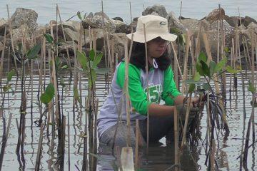 Pulihkan Ekonomi Masa Pandemi, KKP Segera Rehabilitasi 6 Kawasan Mangrove
